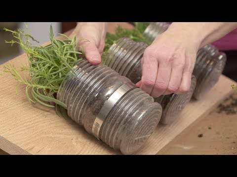 Tips to Become An Expert On Indoor Organic Gardening