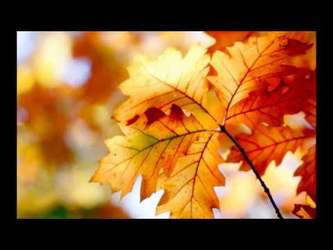 Fall. Nature. Relaxation. Travels. Hiking. Осень. Природа. Отдых. Путешествия. Туризм.