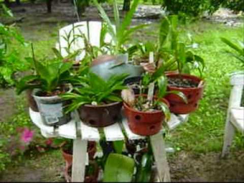 As orquideas invadiram a nossa casa