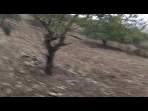 Caça ás Lebres e Coelhos em Mértola, Alentejo-2009