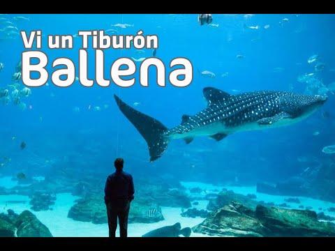 En Atlanta hay Tiburones Ballena