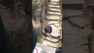 Video Un singe lance du caca !! (WIN) MP3, 3GP, MP4, WEBM, AVI, FLV Mei 2017