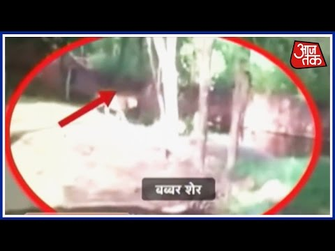 Video Watch: Drunk Man Jumps Into Lion's Cage At Hyderabad Zoo download in MP3, 3GP, MP4, WEBM, AVI, FLV January 2017