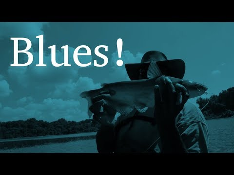 Blue Catfish Lessons | Back on the Plains | Channel Catfish Lessons