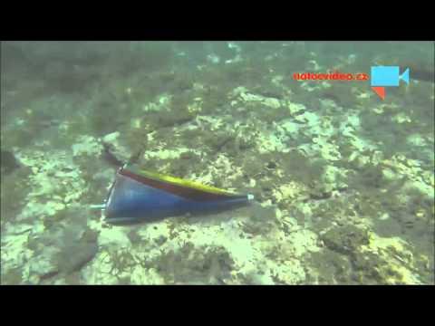 Co vše se dá najít v moři