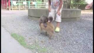 Baby Monkey Riding On A Pig :o