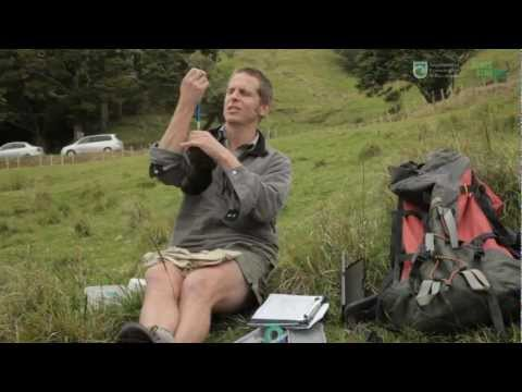 Kiwi (people) - Pete Graham from the Department of Conservation is part of the team monitoring kiwi around Whangarei. Pete has been educating people in Purua near Whangarei ...