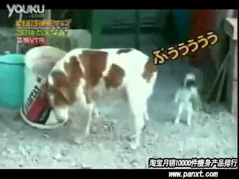 第一次看到被狗放屁嚇到彈起來的貓咪,太好笑了!!