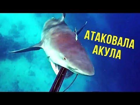 5 ШОКИРУЮЩИХ моментов на рыбалке снятых на камеру - DomaVideo.Ru