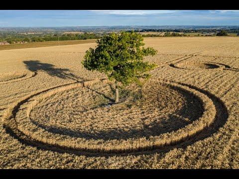 Graancirkel ontdekt rondom boom