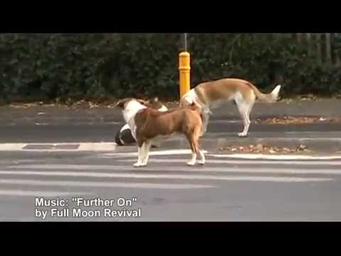 Funny Street Dogs using crosswalks – Full Moon Revival