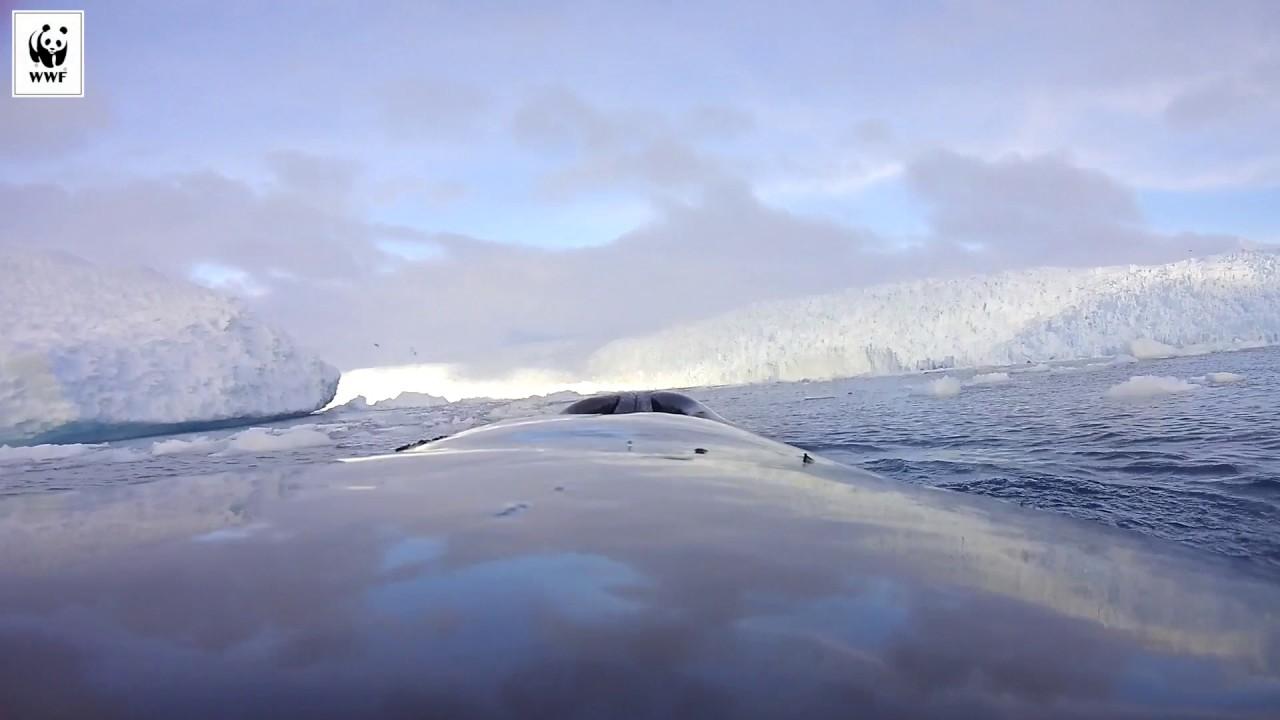 Μέσα από τα μάτια μιας φάλαινας στην Ανταρκτική (2/2)
