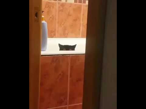 Кот умыкнул рыбу и поспешил спрятаться вместе в ней