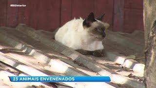Morte de animais em terreno na Vila Souto em Bauru preocupa moradores