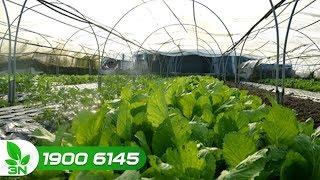 Nông nghiệp | Sản xuất tập trung gặp khó trong phân phối và tiêu thụ nông sản