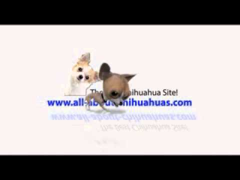 This is The only Chihuahua site you will ever need