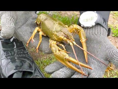 видео ловля крупных раков