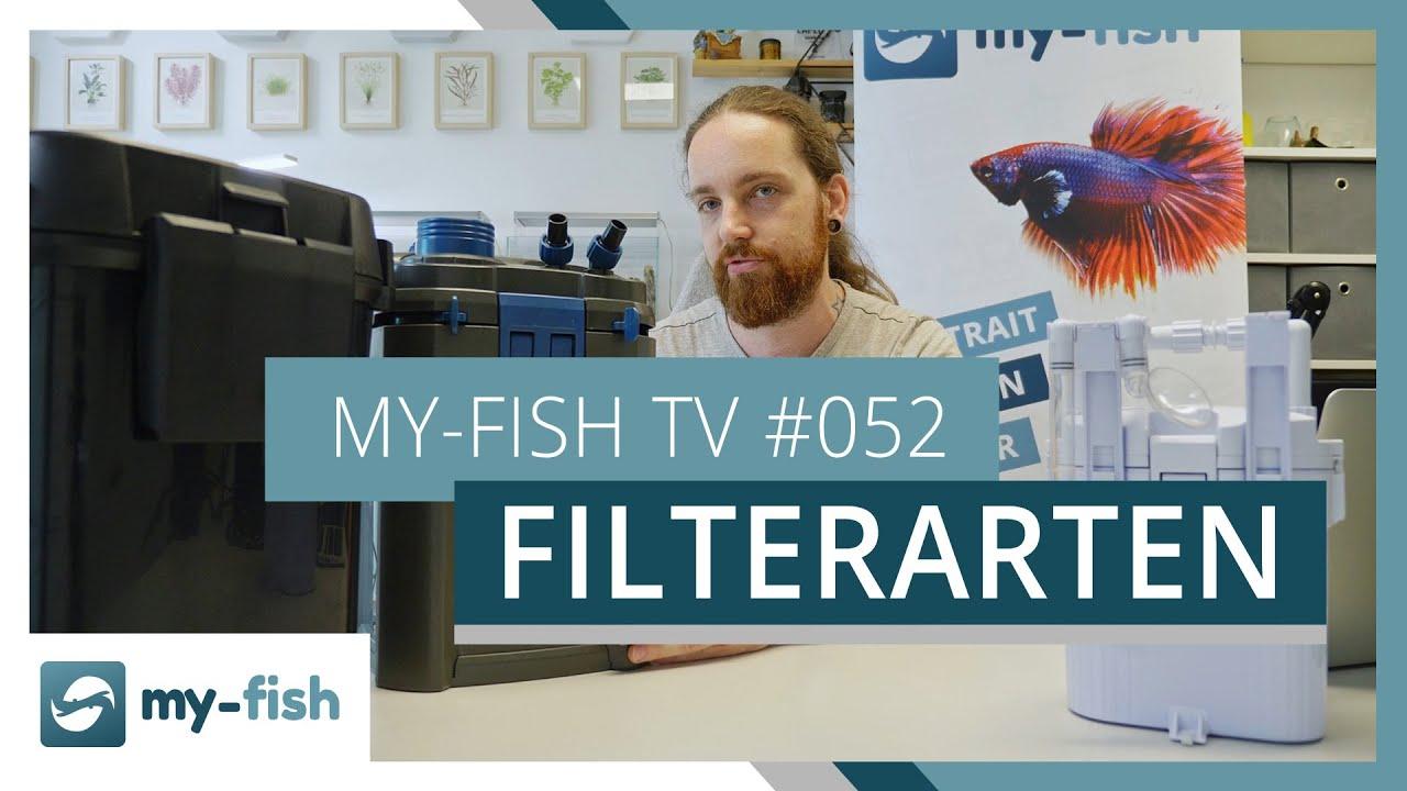 my-fish TV - Deine Nr. 1 Anlaufstelle für alle Themen rund um die Aquaristik 12