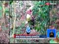 Parah!! Dua Wisatawan Asing Ini Rusak Bunga Bangkai Di Palupuh, Sumbar - BIS 07/04