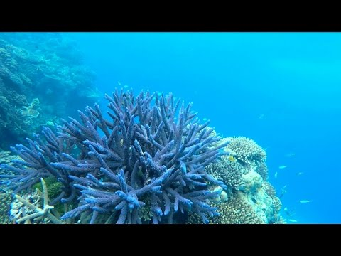 'They're the sickest corals we've ever seen'