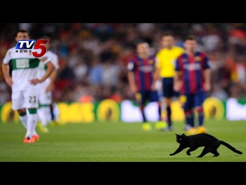 Black Cat Wandered Onto The Field   Interrupts Barcelona Game : TV5 News
