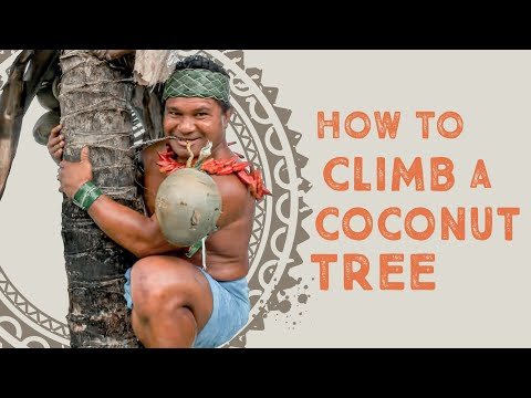 How To Climb a Coconut Tree