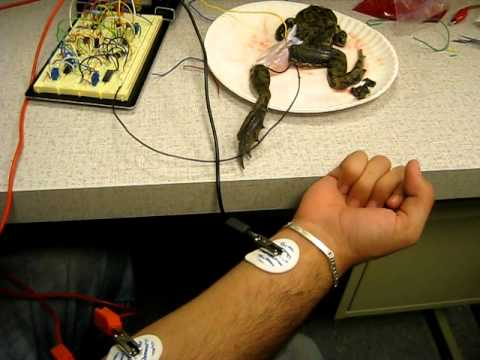 NeuroBridge Biomedizinisches Forschungsteam @ NJIT und ein Frosch