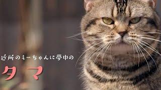 映画『ねことじいちゃん』予告編
