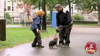 Stealing Cute Puppies Prank