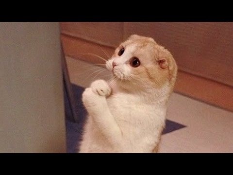 Cats are so funny you will die laughing - Funny cat compilation (видео)