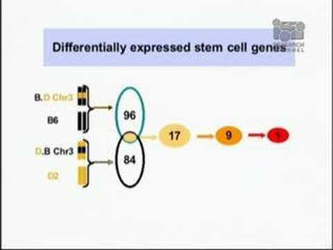 Genetik und die Auswirkungen der Alterung auf Stammzellen