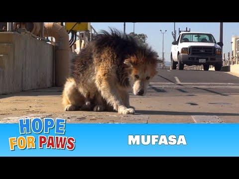 mufasa - cani anziani alla riscossa