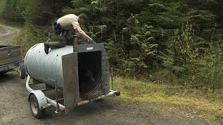 Video Trash-Eating Black Bear Released Back Into the Wild MP3, 3GP, MP4, WEBM, AVI, FLV Mei 2017