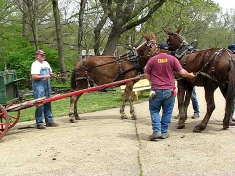 Runaway Mule Cart!