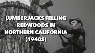 Video 1940s Lumberjacks felling Redwoods in Northern California MP3, 3GP, MP4, WEBM, AVI, FLV September 2019
