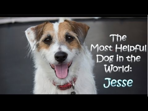helpful - Think Jesse's a Star Dog?☆ Please VOTE for him at the link below =o) http://moderndogmagazine.com/stardog/entry/jesse-0 All you have to do is hit the vote b...