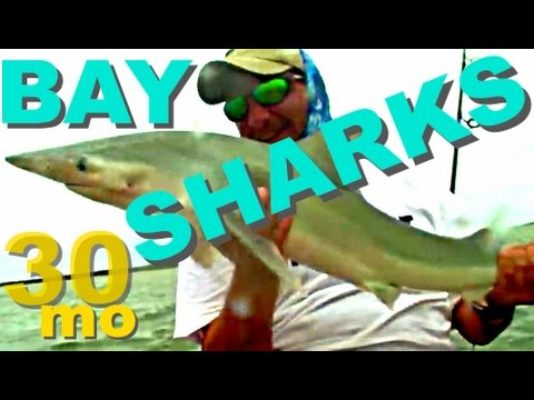 30milesOUT.com #17 –  BULL SHARK inshore KAYAK FISHING