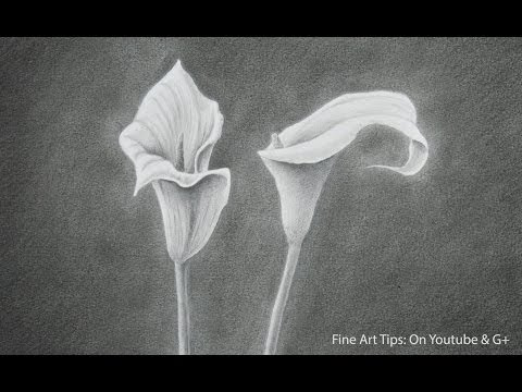 How to Draw a Calla Lily - How to Draw Flowers