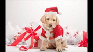 Consejos navideños sobre nuestras mascotas