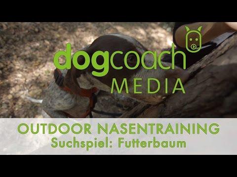 Hundetraining | Outdoor Nasentraining - Suchspiel Futterbaum