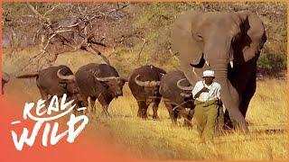 safarilive sunset safari dec, 04, 2017 123vid
