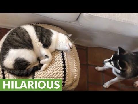 il-cane-che-sveglia-il-gatto-per-giocare