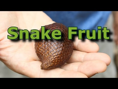 Video Exotic Tropical Fruit: Salak AKA Snake Fruit download in MP3, 3GP, MP4, WEBM, AVI, FLV January 2017