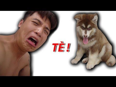 NTN - Gấu Con Alaska Troll Chủ Và Cái Kết ( Dog WC Prank ) (видео)
