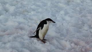 Filmed in January 2015 in Antarctica Filmed in January 2015 in Antarctica