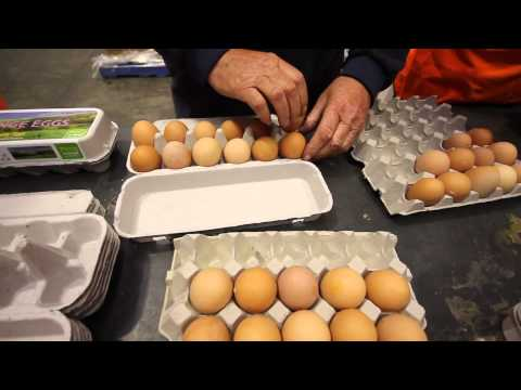 Egg farmers in Australia support food bank