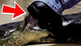 GIANT ANACONDA ATTACKS MY FOOT!! TWO HEAD TURTLE!!   BRIAN BARCZYK by Brian Barczyk