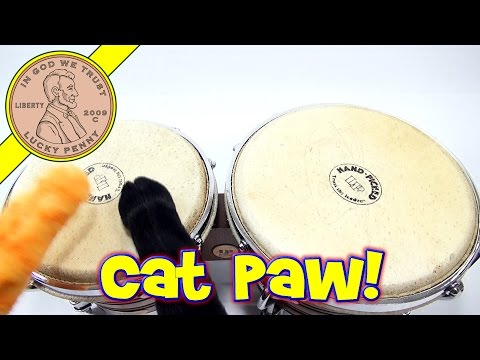 toys - Bongo jam with Cat Paws! Check out these crazy paws as I test them on a set of bongo drums. Buy Here ▷ http://luckypennyshop.com/the-original-cat-paw-toy Lucky Penny Thoughts: Time for...