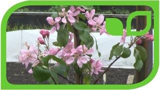Wie erziehe ich eine Obstbaumhecke in meinem Garten?