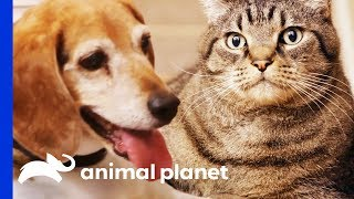 Weight Loss Is No Easy Task For These Chubby Pets! | My Big Fat Pet Makeover by Animal Planet